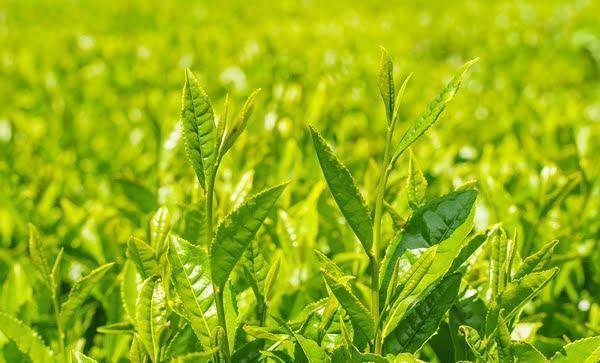Bộ Dưỡng Da Trà Xanh Innisfree Green Tea Seed Serum Special Set Phiên Bản Mới 2019 (4 Sản Phẩm)