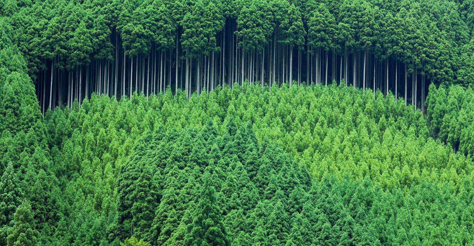 Trồng cây là hành động thiết thực bảo vệ rừng xanh và môi trường (ảnh: internet).