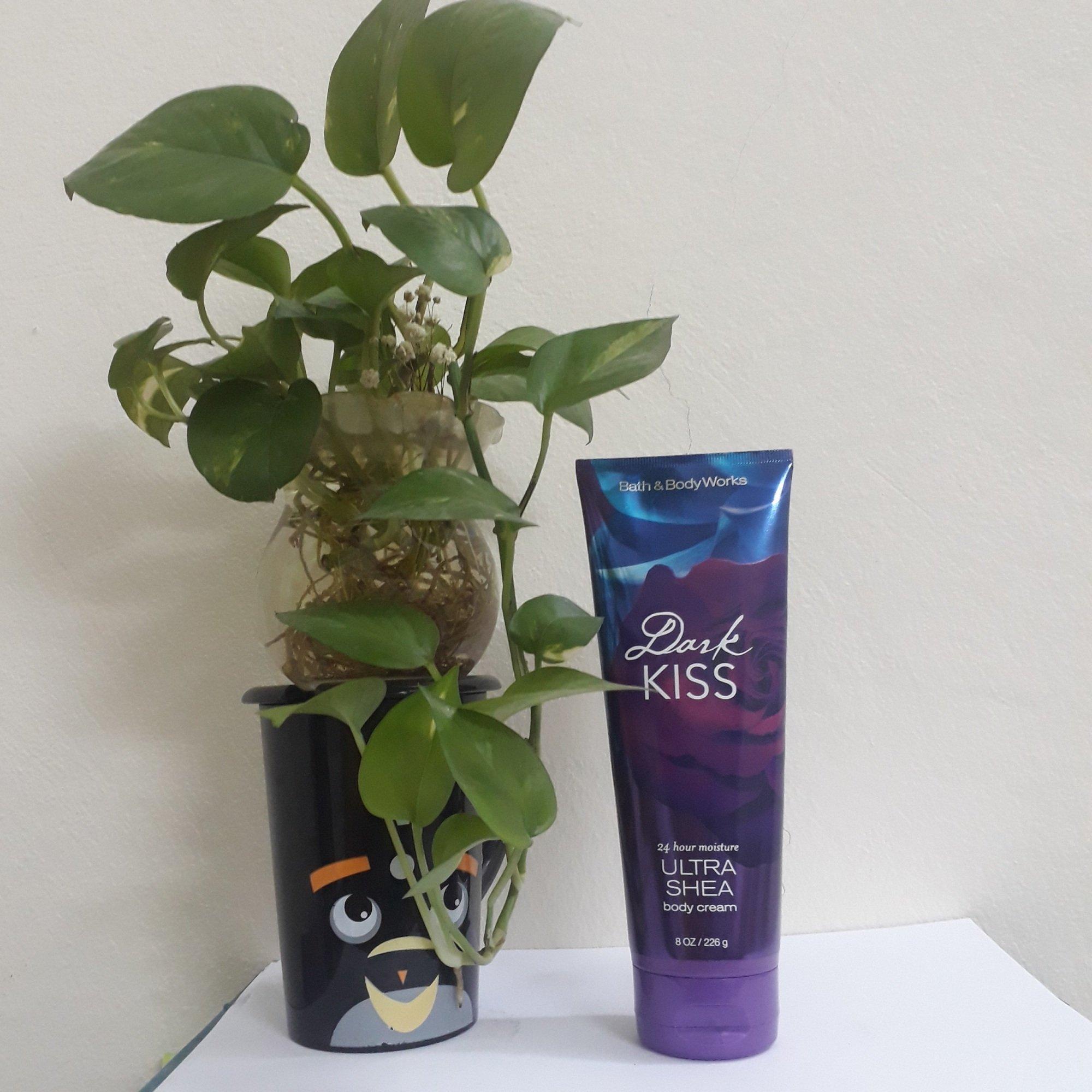 Bao bì kem dưỡng thể Bath & Body Works Dark Kiss Ultra Shea Body Cream nhìn thực sự lộng lẫy, hút mắt, sang trọng (ảnh: BlogAnChoi).